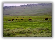 lamar-valley-Yellowstone